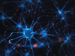 Interconnectedness of neural networks